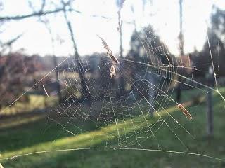 spiderweb-old1