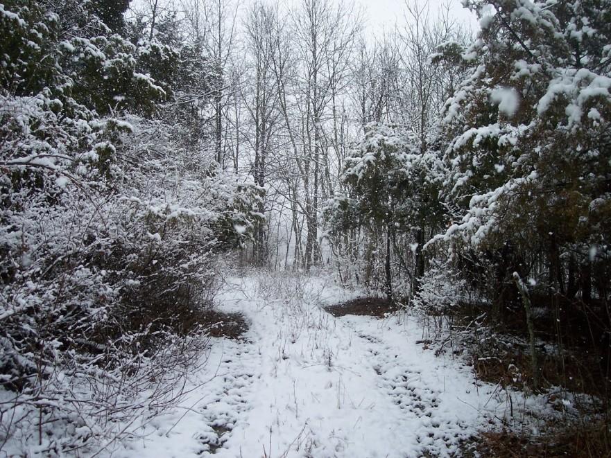 snow-2011-0031