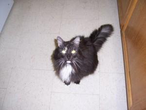 Mitzi 2006 age 15